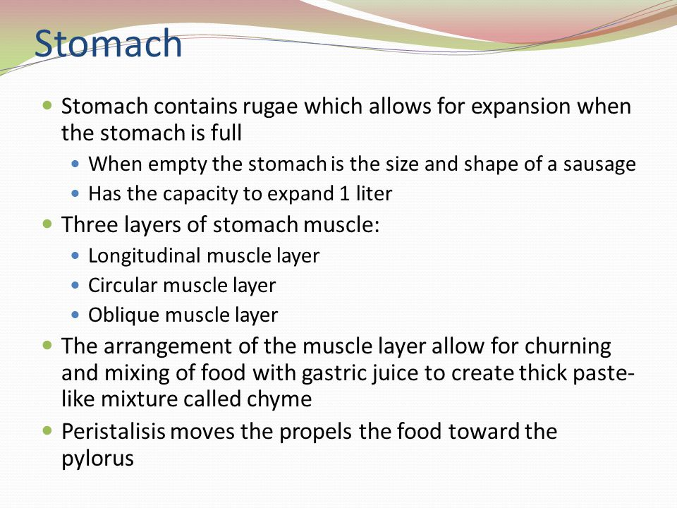 Stomach Stomach contains rugae which allows for expansion when the stomach is full When empty the stomach is the size and shape of a sausage Has the c