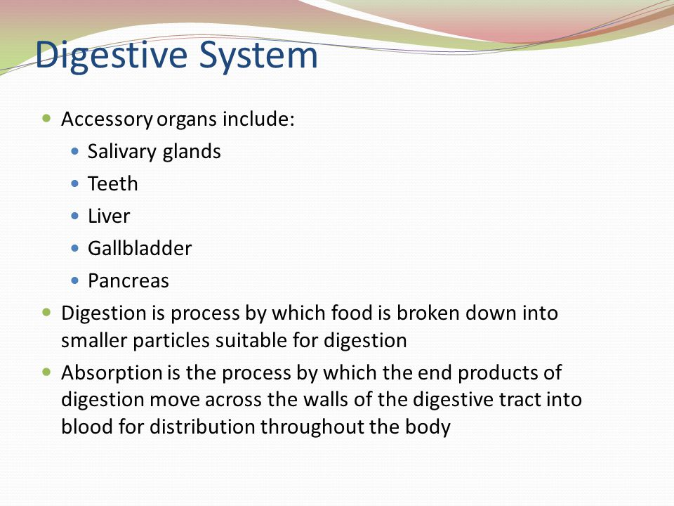 Digestive System Accessory organs include: Salivary glands Teeth Liver Gallbladder Pancreas Digestion is process by which food is broken down into sma