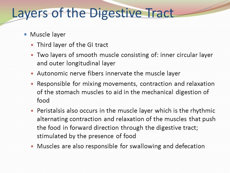 Layers of the Digestive Tract Muscle layer Third layer of the GI tract Two layers of smooth muscle consisting of: inner circular layer and outer longi