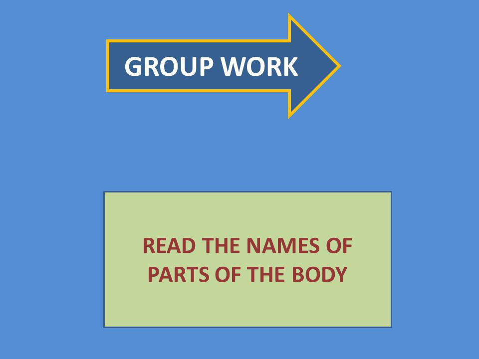 GROUP WORK READ THE NAMES OF PARTS OF THE BODY