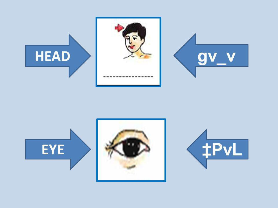 HEAD EYE gv_v PvL