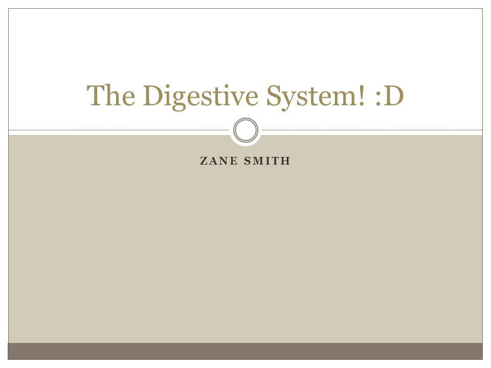ZANE SMITH The Digestive System! :D