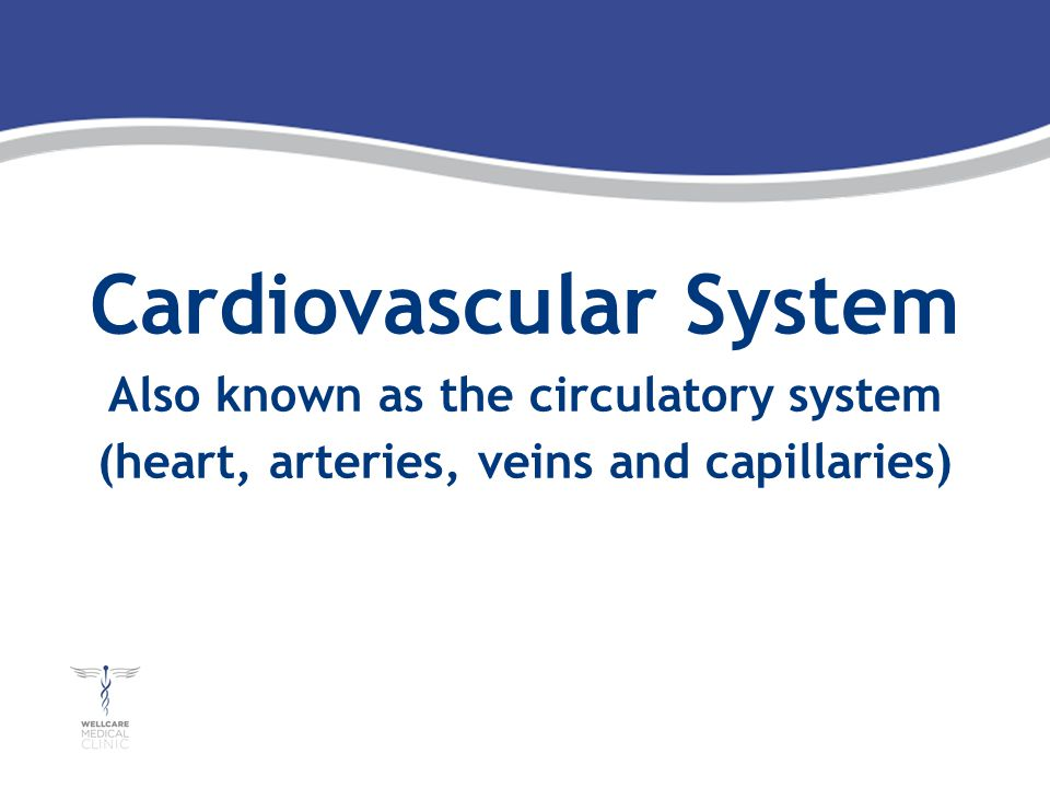 Cardiovascular System Also known as the circulatory system (heart, arteries, veins and capillaries)