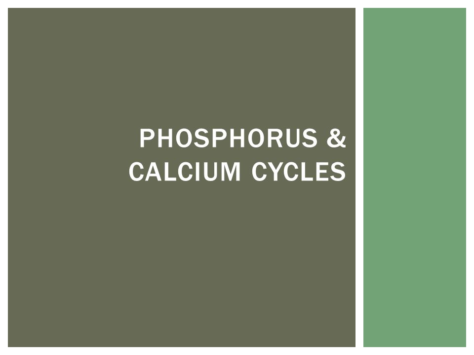 PHOSPHORUS & CALCIUM CYCLES