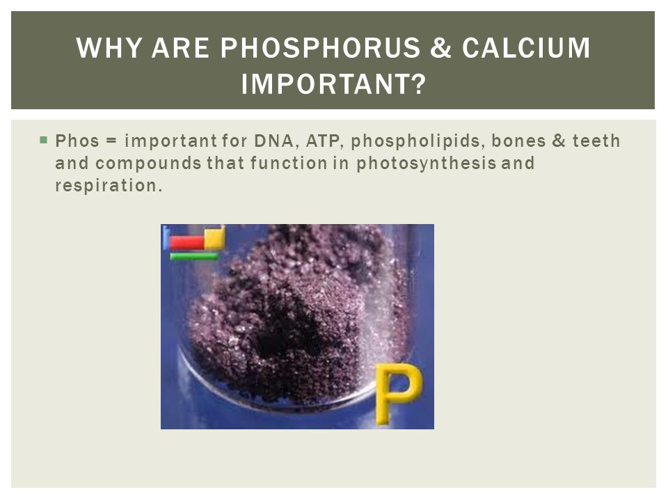 Phos = important for DNA, ATP, phospholipids, bones & teeth and compounds that function in photosynthesis and respiration. WHY ARE PHOSPHORUS & CALCIU