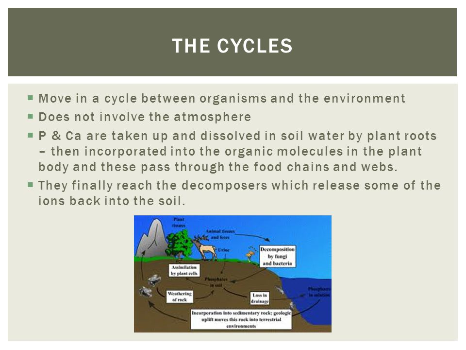 Move in a cycle between organisms and the environment Does not involve the atmosphere P & Ca are taken up and dissolved in soil water by plant roots – then incorporated into the organic molecules in the plant body and these pass through the food chains and webs.