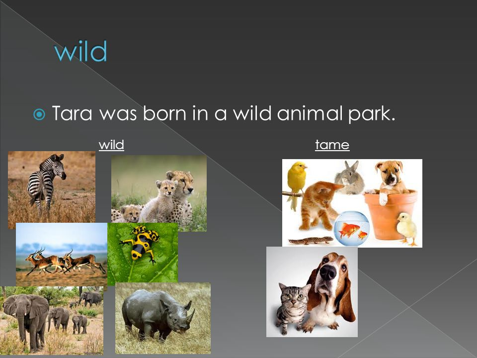 Tara was born in a wild animal park. wild tame