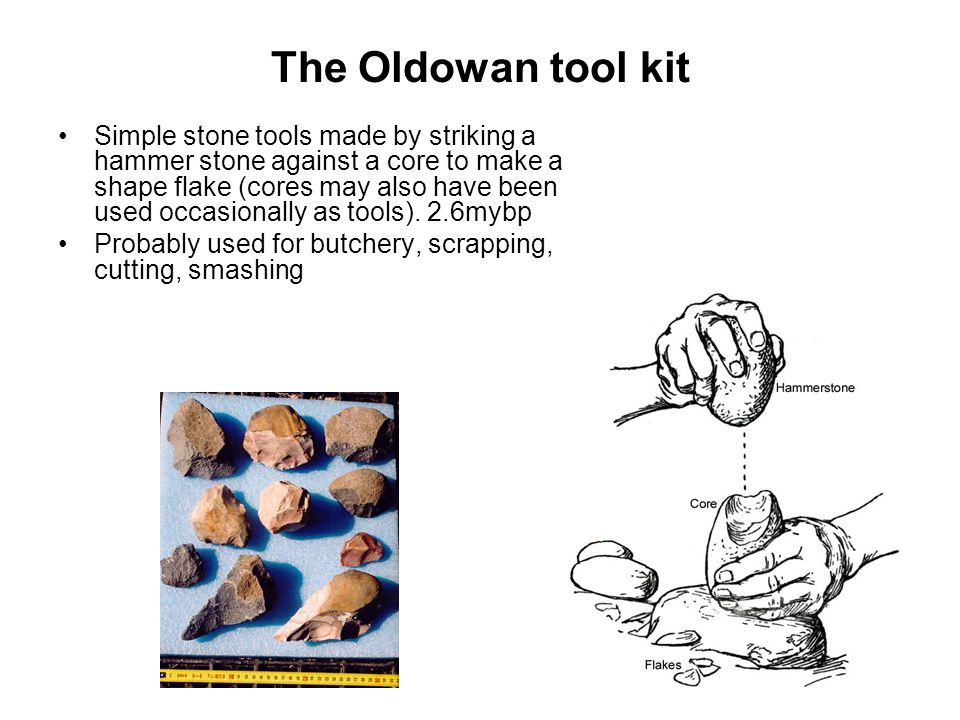 The Oldowan tool kit Simple stone tools made by striking a hammer stone against a core to make a shape flake (cores may also have been used occasional