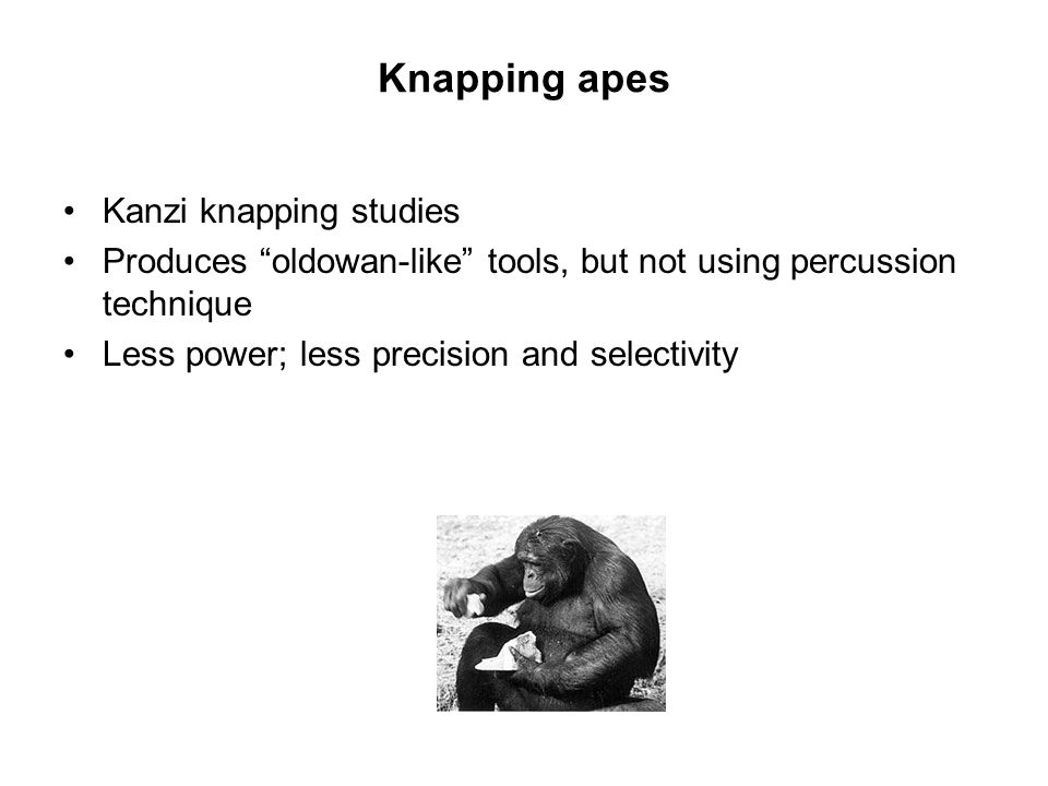 Knapping apes Kanzi knapping studies Produces oldowan-like tools, but not using percussion technique Less power; less precision and selectivity