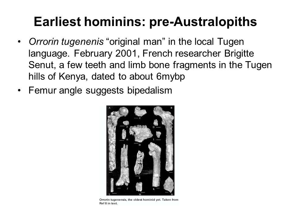Earliest hominins: pre-Australopiths Orrorin tugenenis original man in the local Tugen language. February 2001, French researcher Brigitte Senut, a fe