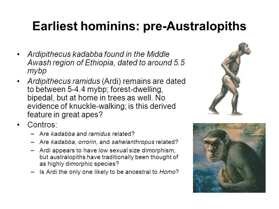Earliest hominins: pre-Australopiths Ardipithecus kadabba found in the Middle Awash region of Ethiopia, dated to around 5.5 mybp Ardipithecus ramidus