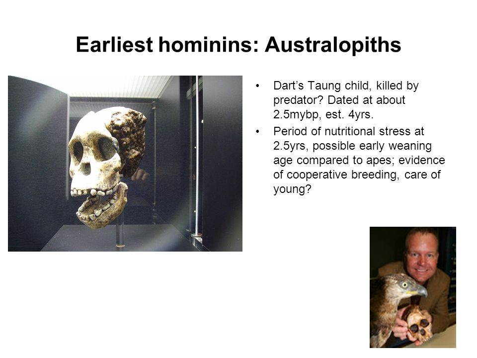 Earliest hominins: Australopiths Darts Taung child, killed by predator? Dated at about 2.5mybp, est. 4yrs. Period of nutritional stress at 2.5yrs, pos
