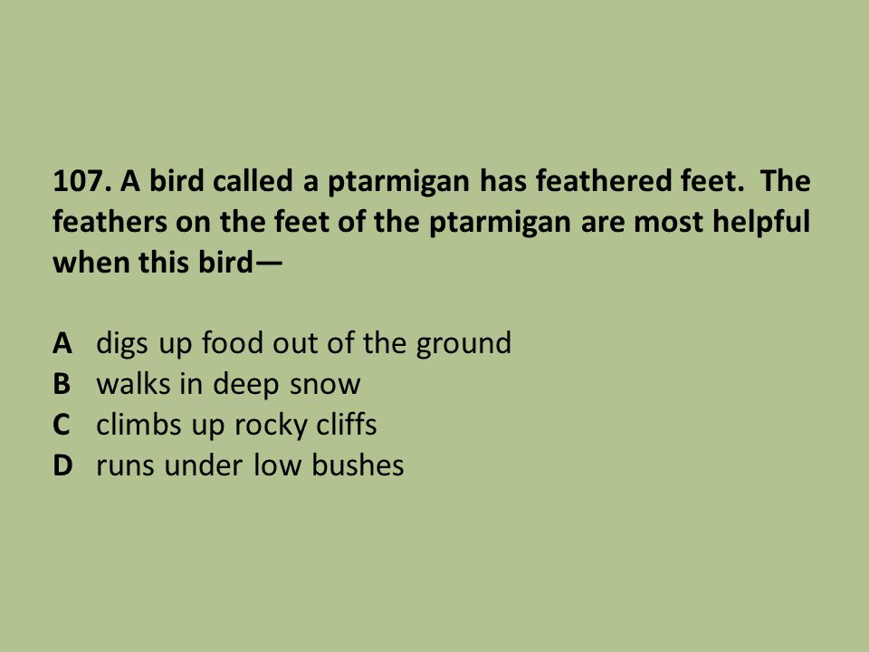 107. A bird called a ptarmigan has feathered feet. The feathers on the feet of the ptarmigan are most helpful when this bird Adigs up food out of the