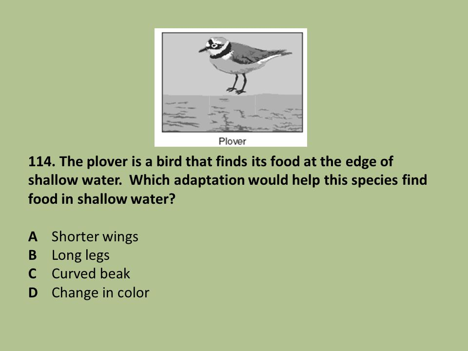 114. The plover is a bird that finds its food at the edge of shallow water. Which adaptation would help this species find food in shallow water? AShor