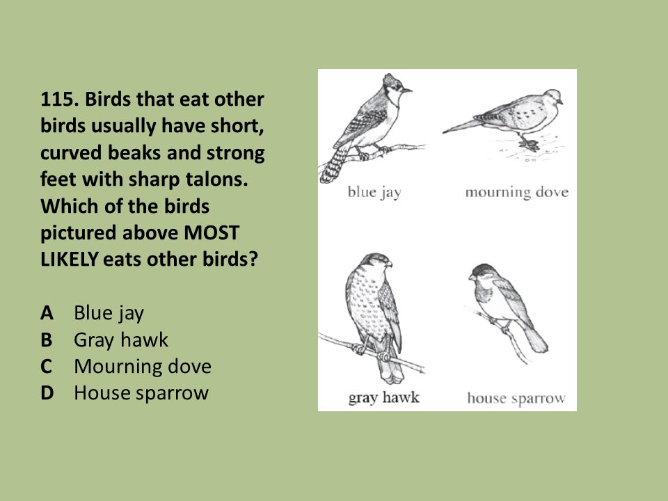 115. Birds that eat other birds usually have short, curved beaks and strong feet with sharp talons. Which of the birds pictured above MOST LIKELY eats