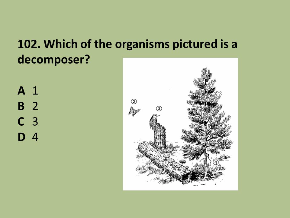 102. Which of the organisms pictured is a decomposer? A1 B2 C3 D4