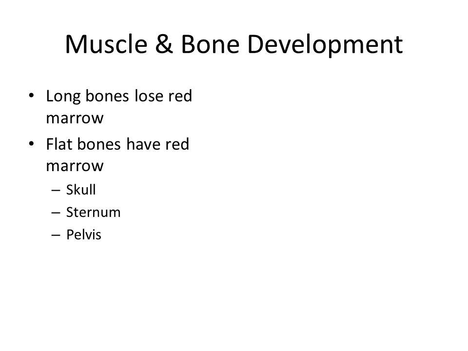 Muscle & Bone Development Long bones lose red marrow Flat bones have red marrow – Skull – Sternum – Pelvis