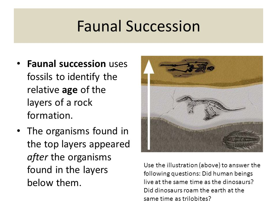 The Fossil Record The fossil record is the ordering of fossils throughout geological time in layers of rock that accumulate and form.