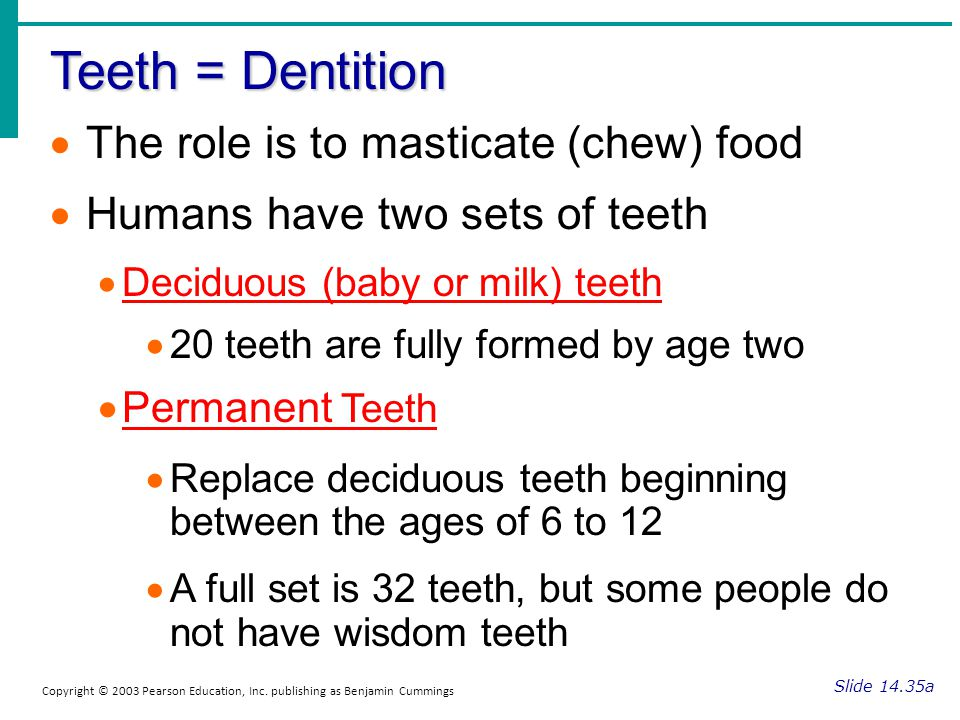 Teeth = Dentition Slide 14.35a Copyright © 2003 Pearson Education, Inc. publishing as Benjamin Cummings The role is to masticate (chew) food Humans ha