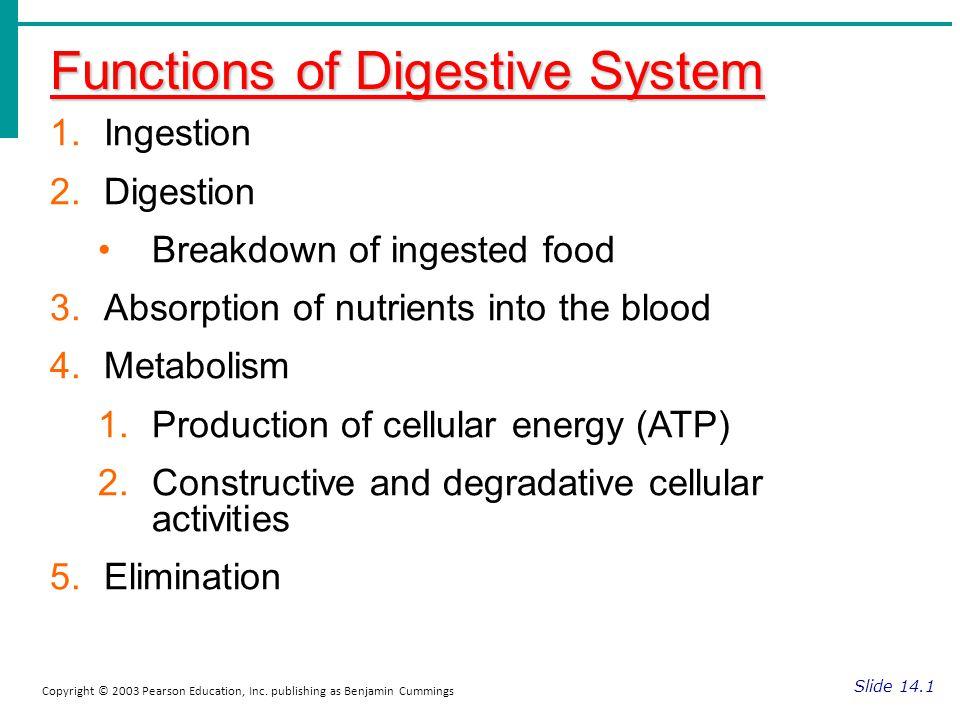 Functions of Digestive System Slide 14.1 Copyright © 2003 Pearson Education, Inc. publishing as Benjamin Cummings 1.Ingestion 2.Digestion Breakdown of