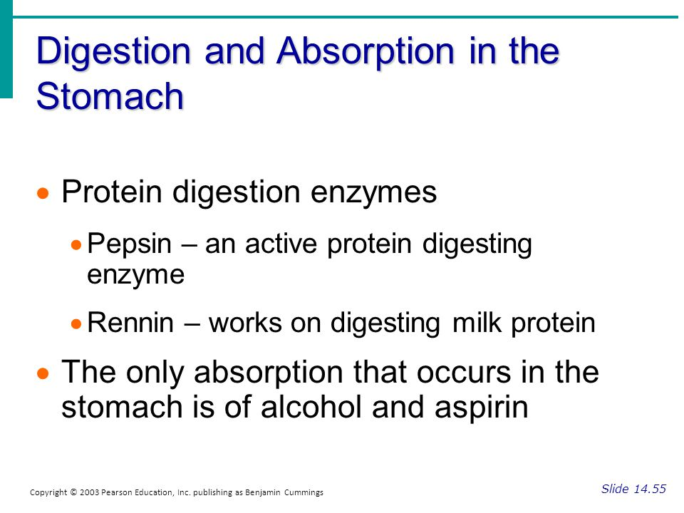 Digestion and Absorption in the Stomach Slide 14.55 Copyright © 2003 Pearson Education, Inc. publishing as Benjamin Cummings Protein digestion enzymes