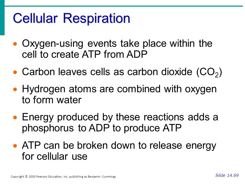 Cellular Respiration Slide 14.69 Copyright © 2003 Pearson Education, Inc. publishing as Benjamin Cummings Oxygen-using events take place within the ce