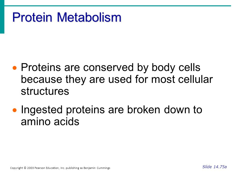 Protein Metabolism Slide 14.75a Copyright © 2003 Pearson Education, Inc. publishing as Benjamin Cummings Proteins are conserved by body cells because