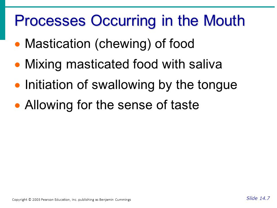 Processes Occurring in the Mouth Slide 14.7 Copyright © 2003 Pearson Education, Inc. publishing as Benjamin Cummings Mastication (chewing) of food Mix