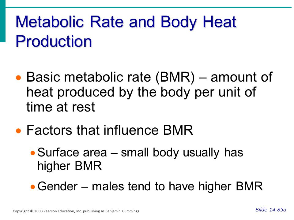 Metabolic Rate and Body Heat Production Slide 14.85a Copyright © 2003 Pearson Education, Inc. publishing as Benjamin Cummings Basic metabolic rate (BM