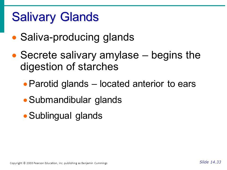 Salivary Glands Slide 14.33 Copyright © 2003 Pearson Education, Inc. publishing as Benjamin Cummings Saliva-producing glands Secrete salivary amylase
