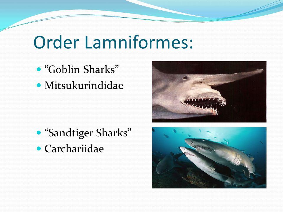 Order Lamniformes: Goblin Sharks Mitsukurindidae Sandtiger Sharks Carchariidae