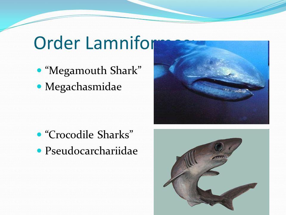 Order Lamniformes: Megamouth Shark Megachasmidae Crocodile Sharks Pseudocarchariidae