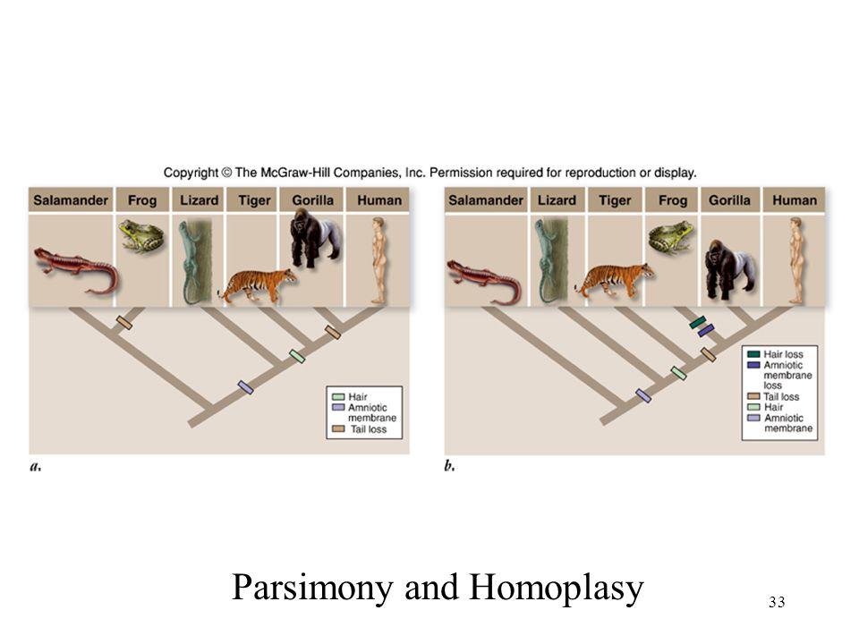33 Parsimony and Homoplasy