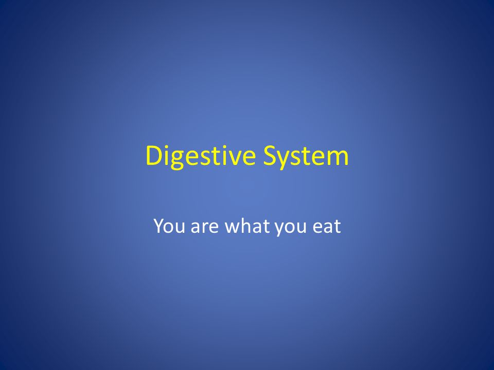 Digestive System You are what you eat