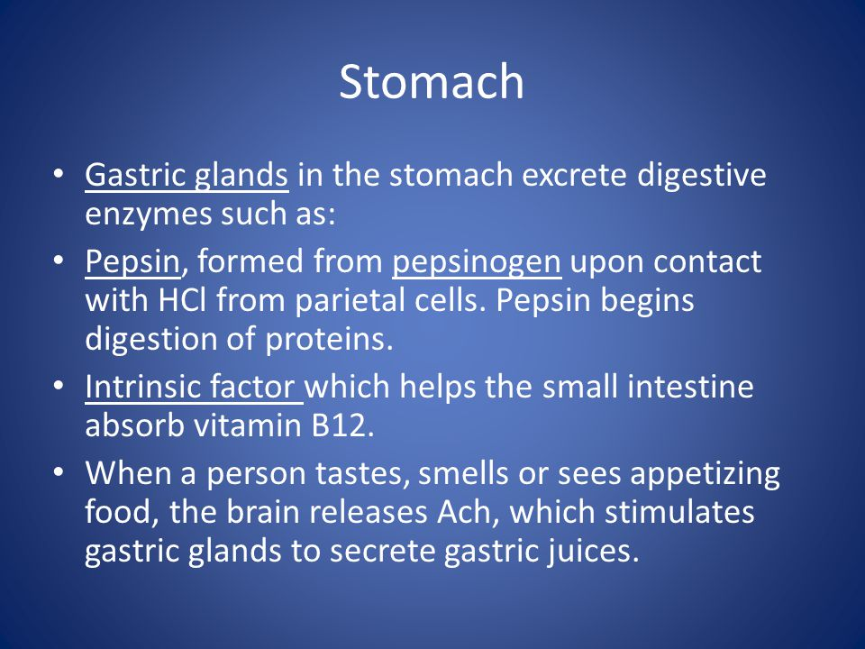 Stomach Gastric glands in the stomach excrete digestive enzymes such as: Pepsin, formed from pepsinogen upon contact with HCl from parietal cells.