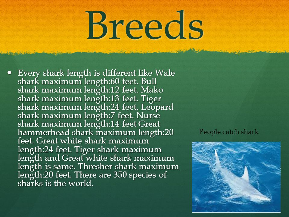 Breeds Every shark length is different like Wale shark maximum length:60 feet.