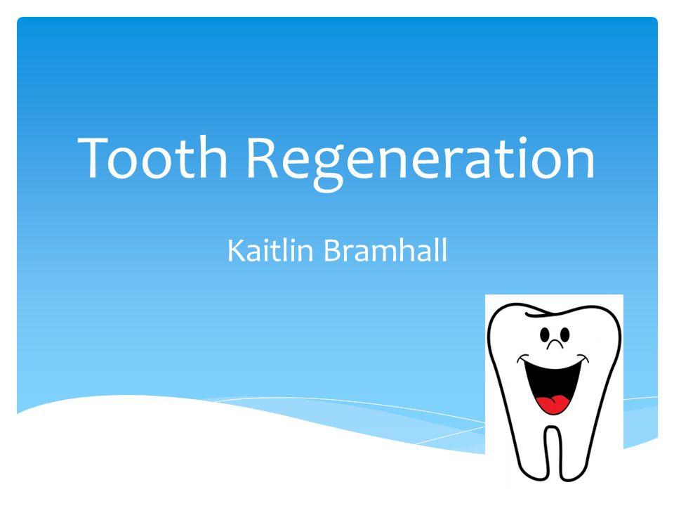 Tooth Regeneration Kaitlin Bramhall