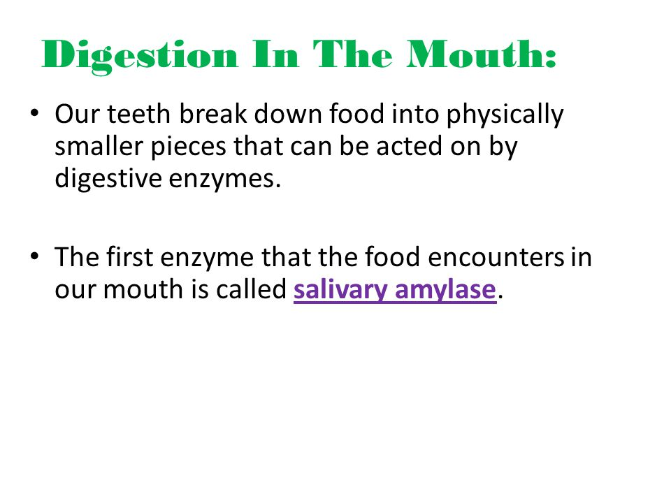 Digestion In The Mouth: Our teeth break down food into physically smaller pieces that can be acted on by digestive enzymes.