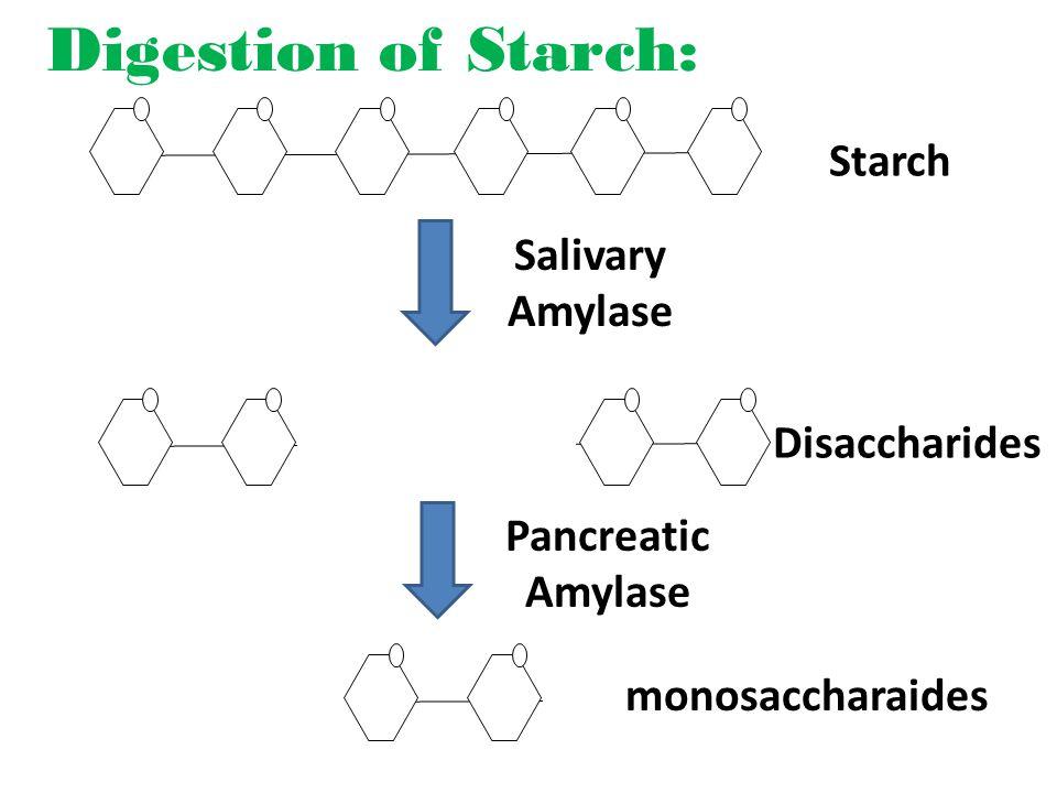 Digestion of Starch: Starch Salivary Amylase Disaccharides Pancreatic Amylase monosaccharaides