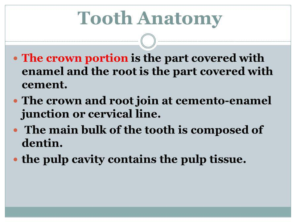 Tooth Anatomy The crown portion is the part covered with enamel and the root is the part covered with cement. The crown and root join at cemento-ename