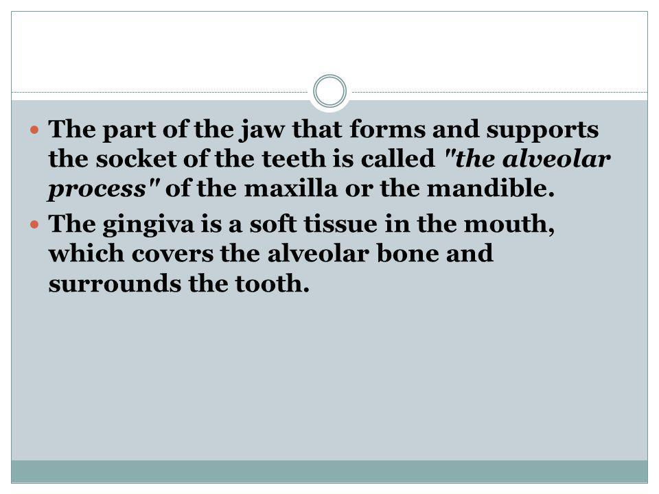 The part of the jaw that forms and supports the socket of the teeth is called