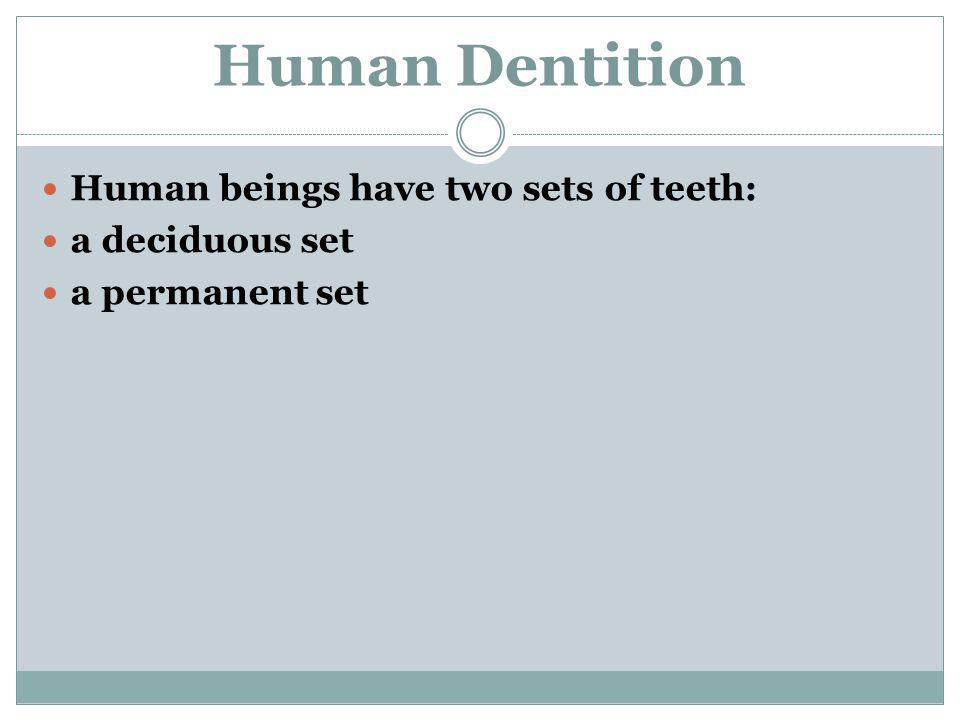 Human beings have two sets of teeth: a deciduous set a permanent set