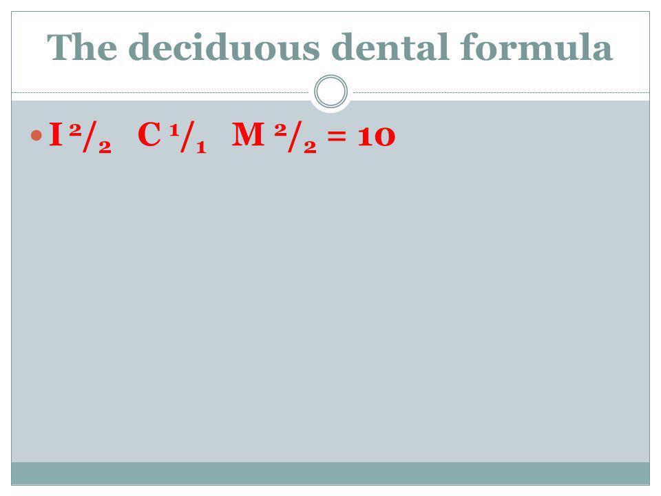 The deciduous dental formula I 2 / 2 C 1 / 1 M 2 / 2 = 10