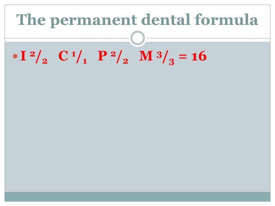 The permanent dental formula I 2 / 2 C 1 / 1 P 2 / 2 M 3 / 3 = 16