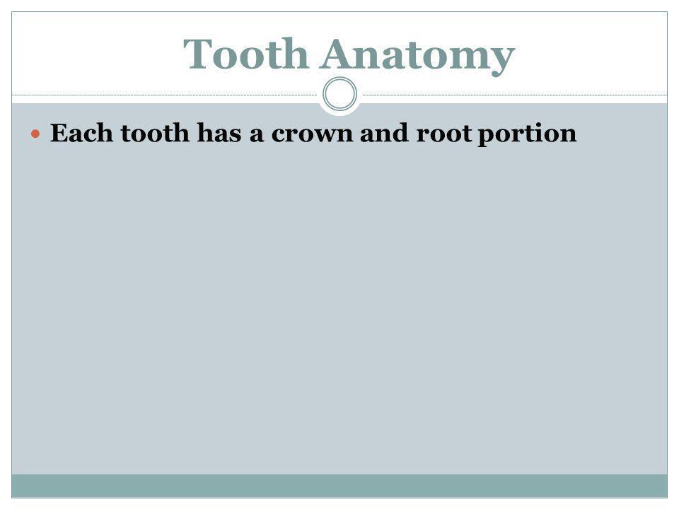 crown root