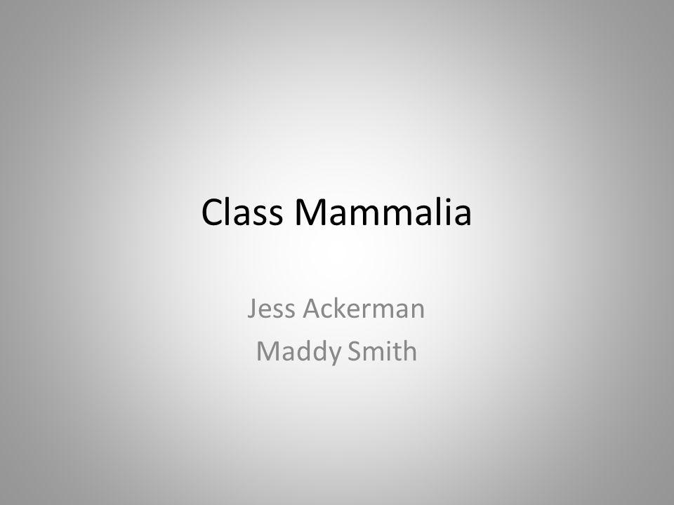 Class Mammalia Jess Ackerman Maddy Smith