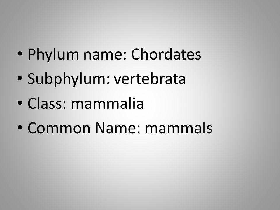 Phylum name: Chordates Subphylum: vertebrata Class: mammalia Common Name: mammals