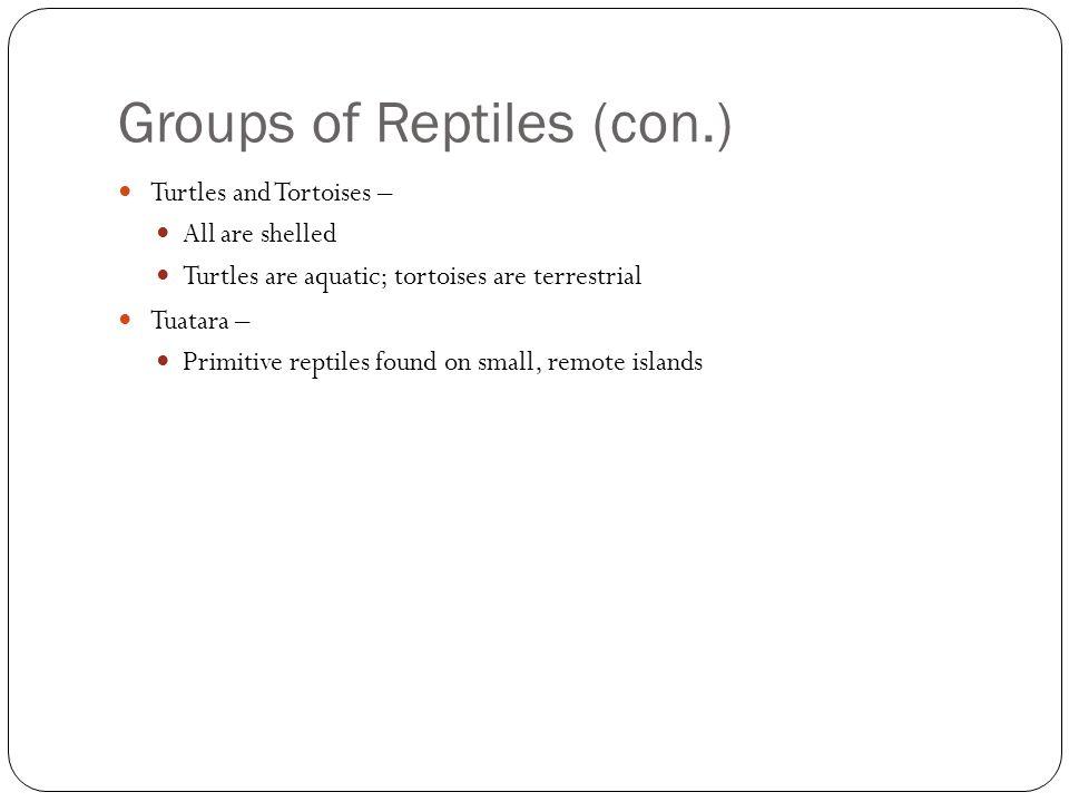 Groups of Reptiles (con.) Turtles and Tortoises – All are shelled Turtles are aquatic; tortoises are terrestrial Tuatara – Primitive reptiles found on