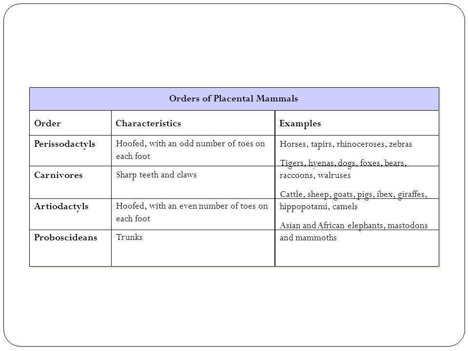 Orders of Placental Mammals Order Perissodactyls Carnivores Artiodactyls Proboscideans Order Perissodactyls Carnivores Artiodactyls Proboscideans Char