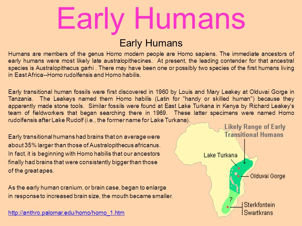 Early Humans Humans are members of the genus Homo modern people are Homo sapiens. The immediate ancestors of early humans were most likely late austra